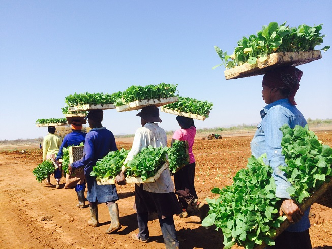 Transplanting south africa