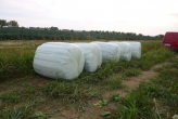 Wrapped and baled